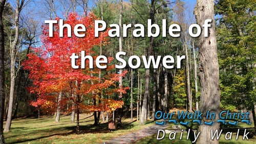 The Parable of the Sower | Daily Walk 13